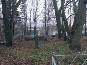 Старые деревья Невель фото