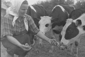 Сельское хозяйство Невель фото