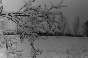 Фото В.Н. Глижинского
