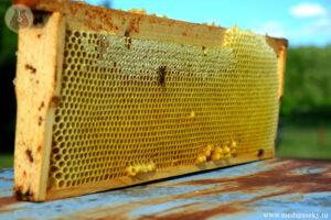 Пчеловодство Невель